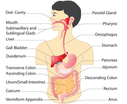 Prolog Materi Sistem Pencernaan