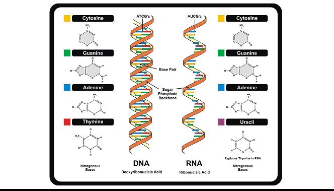 Prolog Materi Materi Genetik