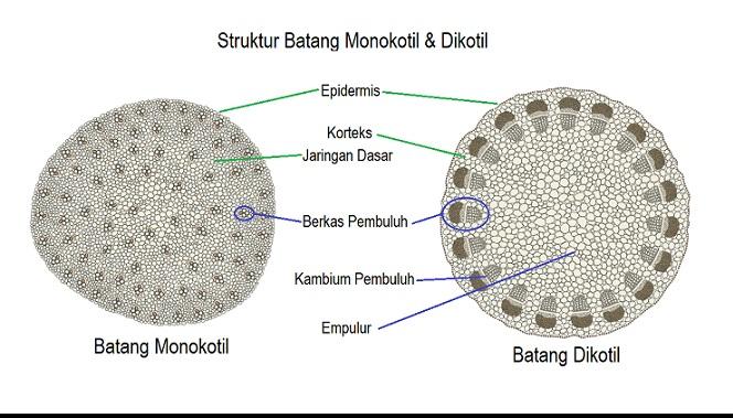 Prolog Materi Struktur Batang Tumbuhan