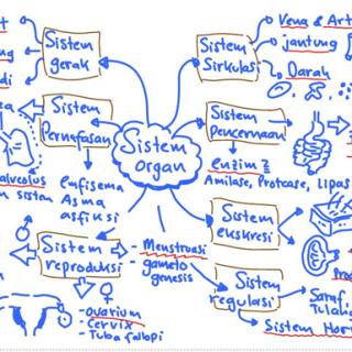 Belajar Efektif Dan Efisien Untuk Un Biologi Bagian 1 Zeniusblog