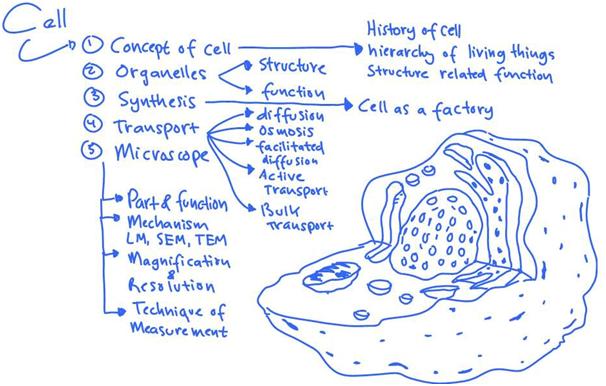 struktur sel dan fungsi organel