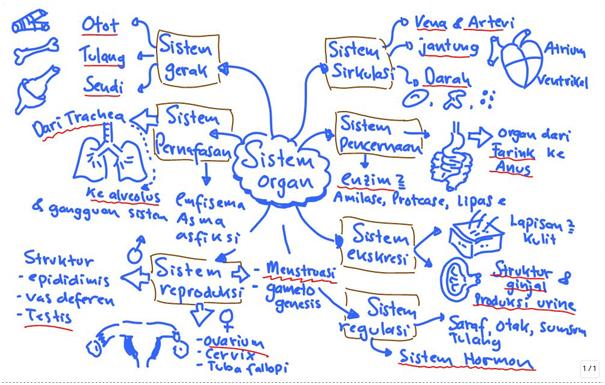 konsep-fisiologi-sistem-organ-manusia