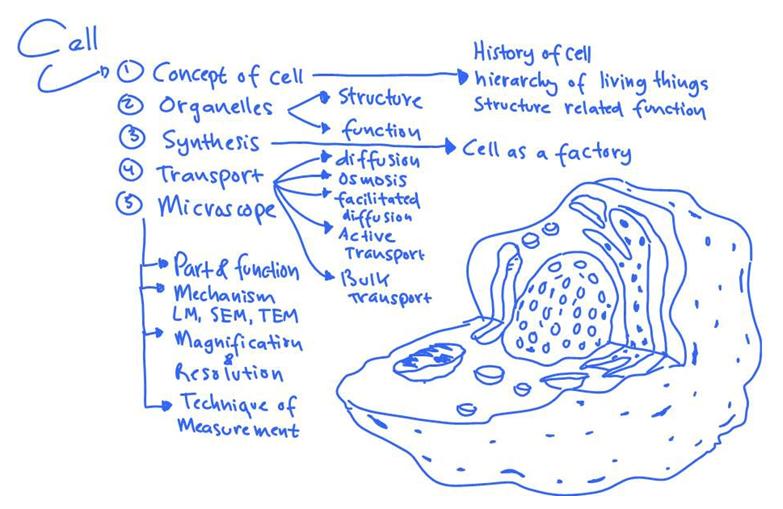 Tips Persiapan Belajar Sbmptn Biologi Zenius Blog