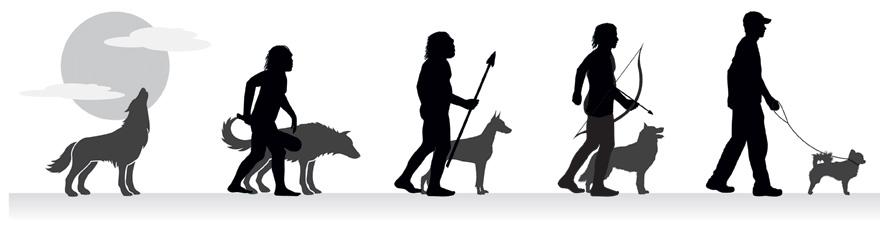 Evolusi pada Anjing