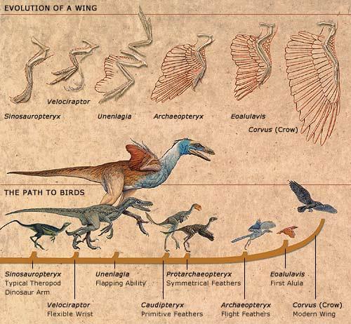 fossil nenek moyang aves