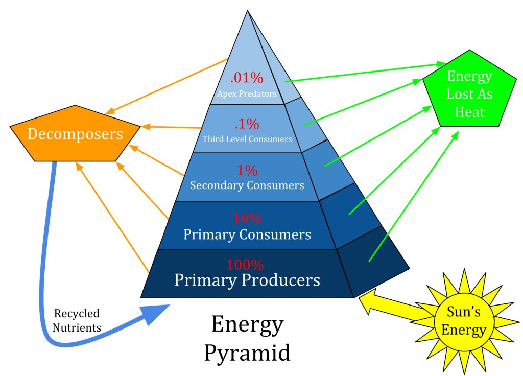 Ecological_Pyramid_converted