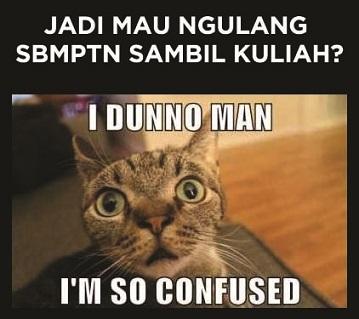 confuse cat