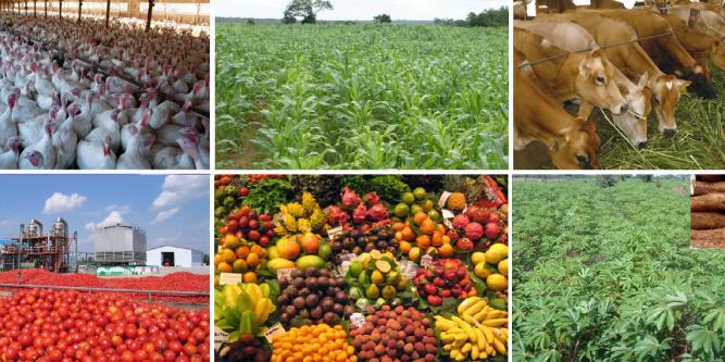 Agrikultur: Kesalahan Terbesar Manusia Sepanjang Sejarah? 63