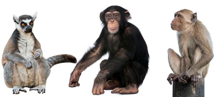 Berbagai Pandangan Keliru tentang Teori Evolusi 118