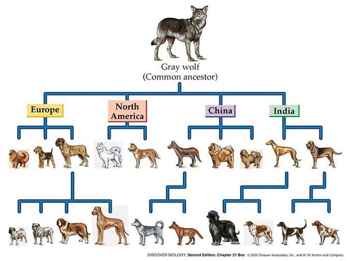 Berbagai Pandangan Keliru tentang Teori Evolusi 115