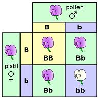Berbagai Pandangan Keliru tentang Teori Evolusi 119