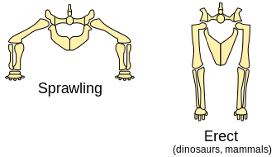 Mengapa Dinosaurus Bisa Berukuran Raksasa? 210