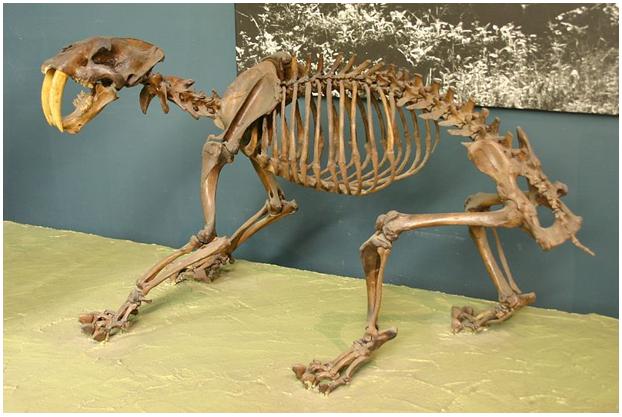 Mengapa Dinosaurus Bisa Berukuran Raksasa? 211