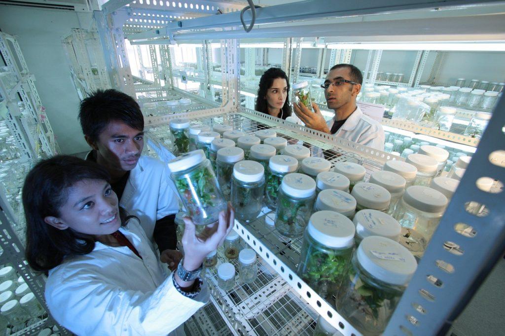 Bioteknologi kultur jaringan