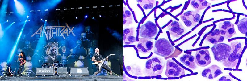 Penyakit Anthrax
