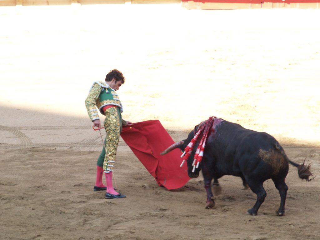 Fakta menarik sapi tidak bisa melihat warna merah