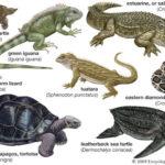 klasifikasi hewan reptil