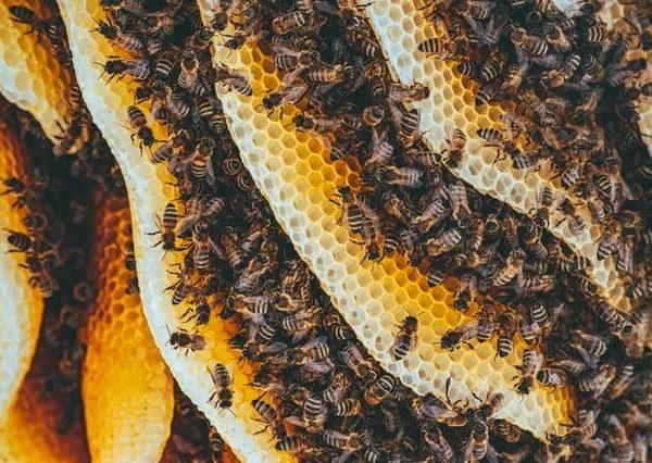 bentuk sarang lebah